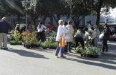 """Akcija """"Moj cvjetni Senj"""" – sadnice jeftinije 30 posto"""
