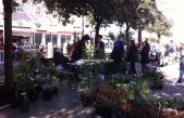 Senjani kupovali lavandu, smilje, ružmarin i kadulju za svoje vrtove