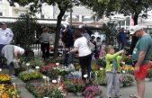 Festival od rožicov u Senju