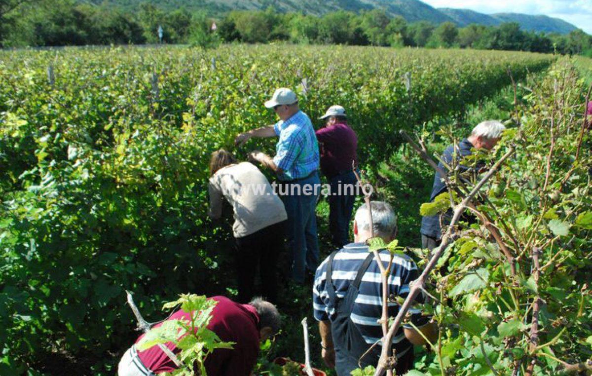 Vinistra: Pavlomir ima najbolji rosé, a žlahtina je viceprvak