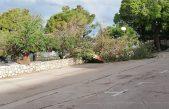 Vjetar srušio stablo ispod Omorike