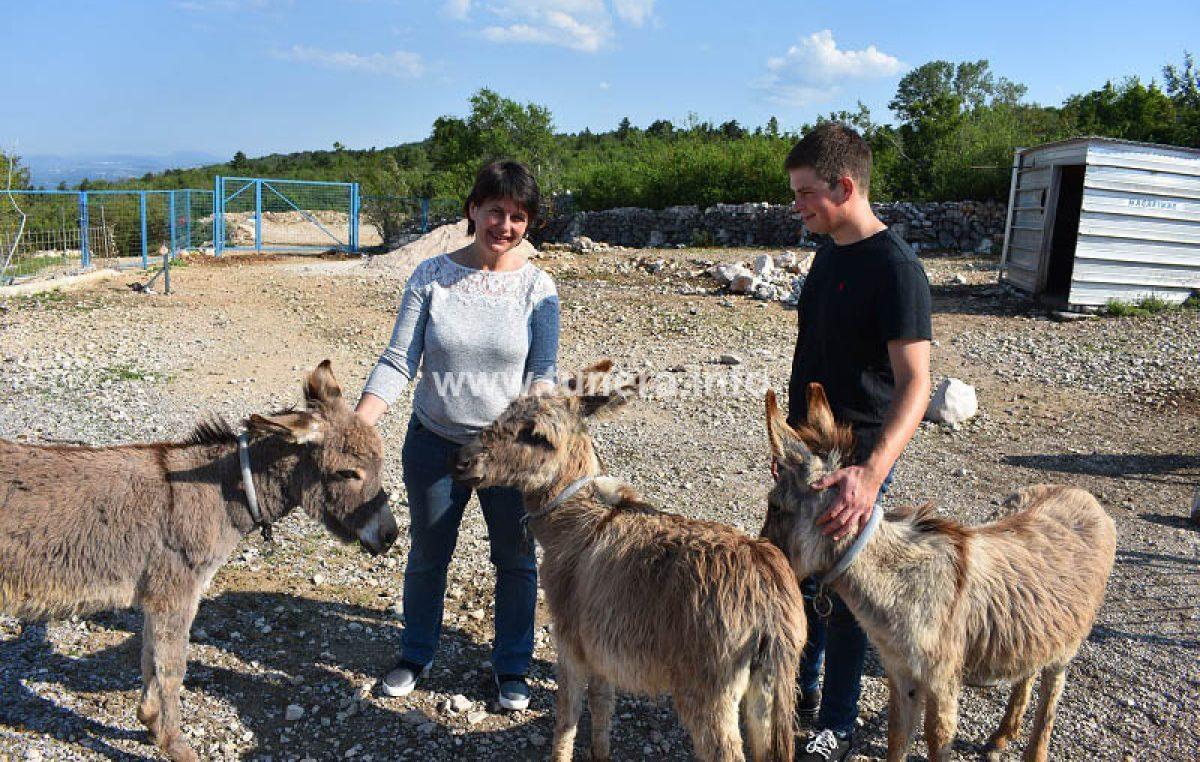 Farma u Šmriki: Magarci privlače turiste i daju ljekovito mlijeko