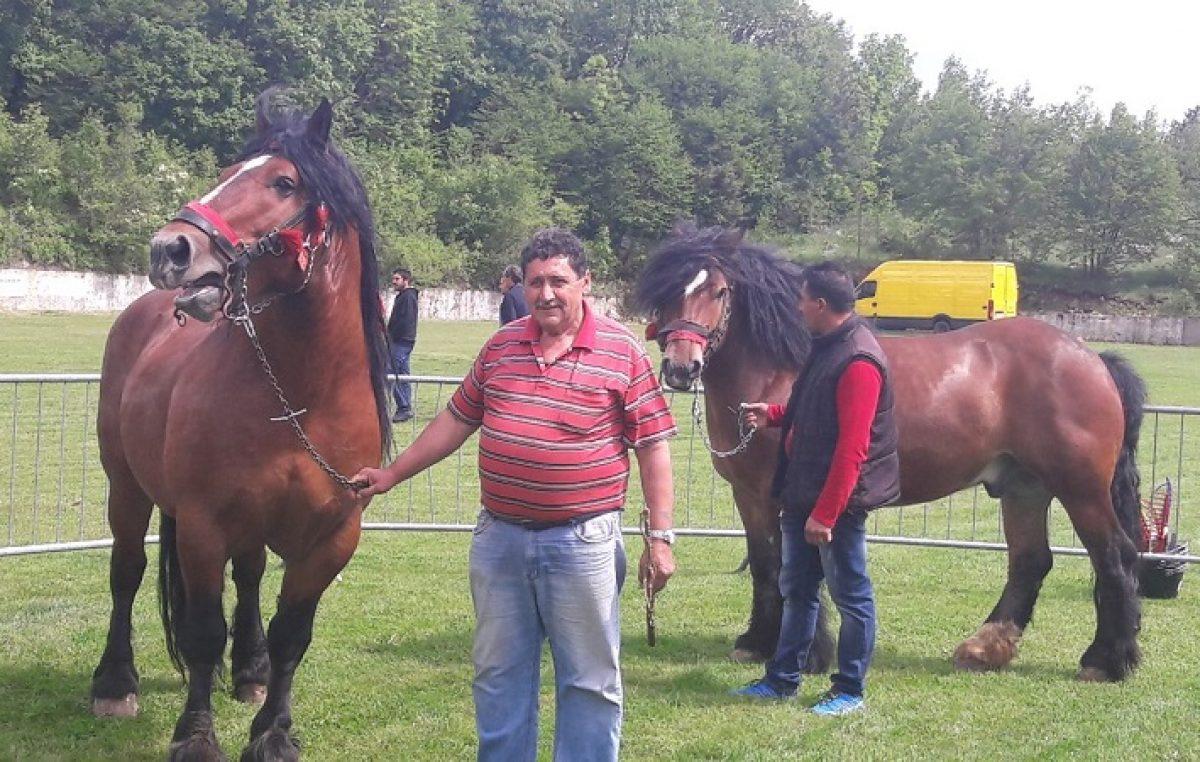 Vlasnici ponosno pokazali 27 grla na Izložbi konja u Krivom Putu