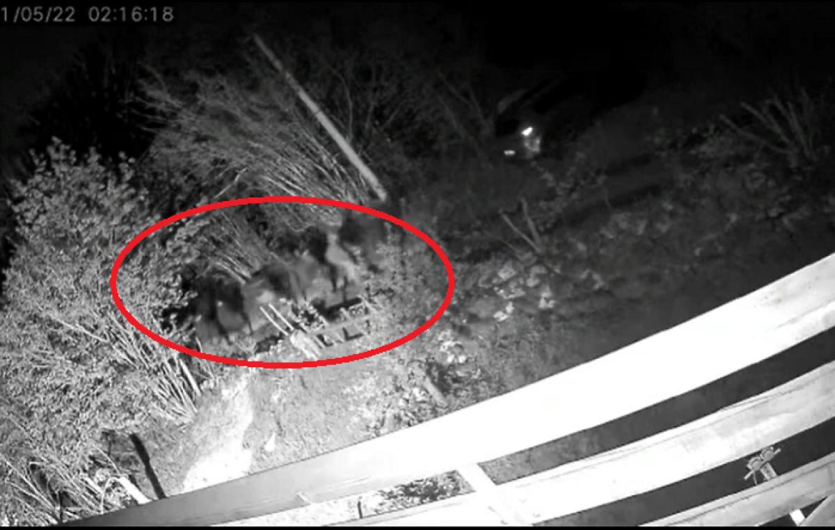 VIDEO Kamera uhvatila noćni marš 48 migranata na Lukovu